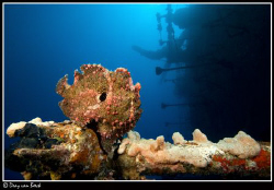 Frogfish. Same lucky week. by Dray Van Beeck 
